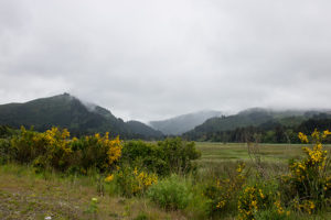 Countryside Near Portland