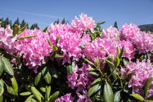 Portland Flowers